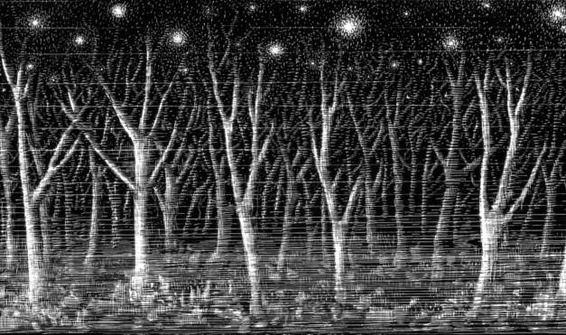 Bosque de árboles sin hojas en noche estrellada, en blanco y negro. Ilustración del libro Mi taza de té, de Dror Burstein y Meir Appelfeld. Editorial Leetra.