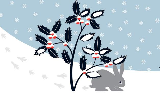 Conejo bajo el árbol, mientras nieva. Ilustración del libro Mientras te espero, de Émilie Vast. Editorial Leetra.