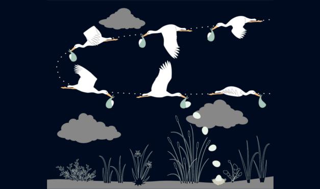 Ilustración del libro Cuac - gaviotas dejando a los bebés animales